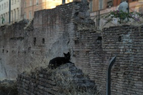 One inhabitant of the ruins (Photo: Nick Boffardi)