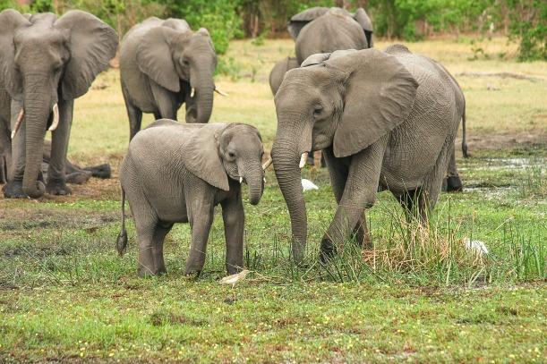elephant-2923917_1920.jpg