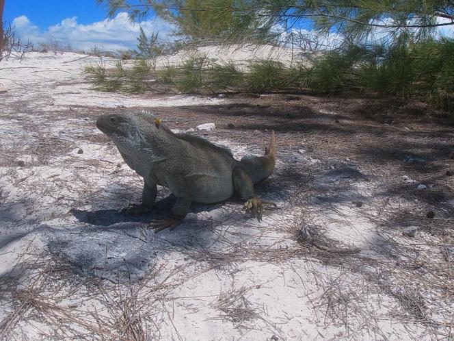 Turks Caicos173.JPG